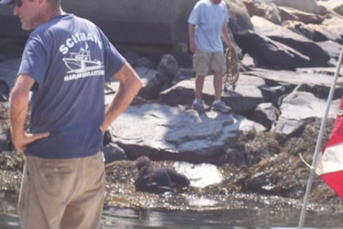 July 2012: Continued marina chain maintenance by Harbormaster Crew – George Ande